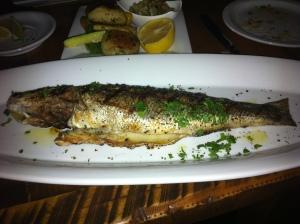 vittorio fish
